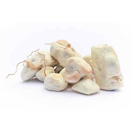 Baobab bio (huile végétale de)