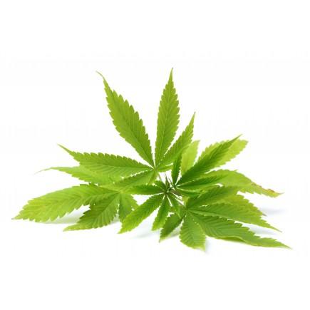 Chanvre bio (huile végétale de)