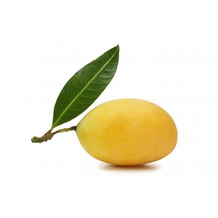 Marula (huile végétale de)