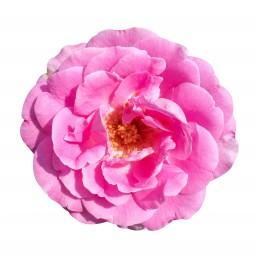Eau de rose – Mawena – produits cosmétiques bio