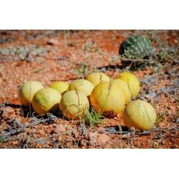 Melon d'eau du Kalahari (Huile végétale de)