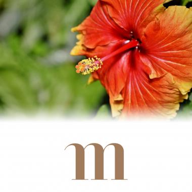 Zoom sur l'hibiscus : bienfaits et propriétés pour la peau