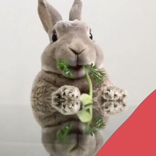 """// MAWENA & CO // 🐰 . . 🇫🇷 """"Les sociétés qui manquent de respect pour les animaux finissent par perdre le respect des êtres humains."""" - Wayne Gerard Trotman, cinéaste . Chez Mawena nous sommes Vegan & Cruelty free, parce que nous estimons que les petits lapins ne méritent pas de souffrir pour tester des cosmétiques, tout comme aucun autre animal d'ailleurs. Commentez avec un petit 💚 si vous êtes d'accord ! . . 🇬🇧 """"Societies that lack respect for animals eventually lose respect for human beings."""" - Wayne Gerard Trotman, moviemaker . At Mawena we are Vegan & Cruelty free, because we believe that little bunnys should not deserve to suffer in order to test cosmetics, just like any other animal for that matter. Leave us a little 💚 in the comments section if you agree ! . 🎬 @and_olive_ . . #mawena #bunny #cutestthingever #lapinou #cutie #animallovers #crueltyfreebeauty #animalsofinstagram #animalsdoingthings #veganbeauty #organicskincare #greenbeauty #cosmetiquenaturelle #naturalbeauty #vegancosmetics #pinkfeed #indiebrand #confidentbeauty #beautenaturelle #greenliving #nontoxicbeauty"""