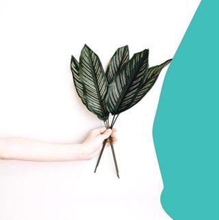 // MAWENA & CO // 🌸 . .  🇫🇷 Aussi décoratives qu'un bouquet de fleurs, chez @mawenaparis on est fan des feuilles aussi !  . 👉 Plutôt team fleurs ou feuilles ? . . 🇬🇧 As decorative as a bouquet of flowers, at @mawenaparis we are fan of leaves too! . 👉 Rather team flowers or leaves? . . . 📸 @sabakirana . . #mawena #veganbeauty #organicskincare #greenbeauty #indiebrand #confidentbeauty #beautenaturelle #beauteengagee #ethicalbeauty #ethicallymade #cosmetiquebio 